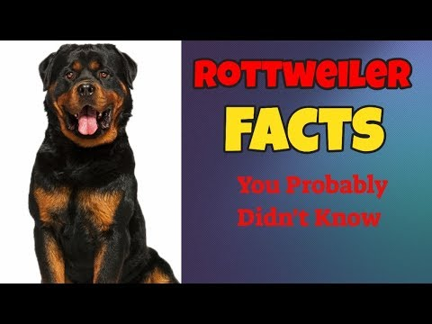 Facts You Probably Didn't Know About Rottweilers