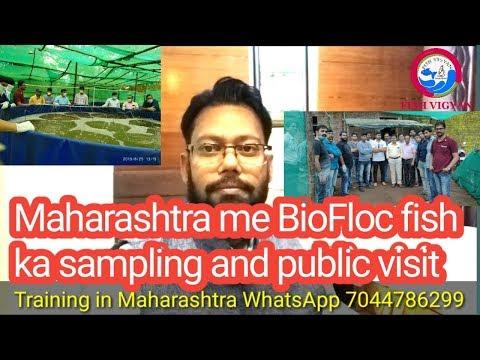 Repeat Farm In West Bengal Hooghly || Desi Murgi || Sonali