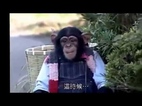 Japanese Funny Video : Pan-Kun (Chimp) & James (Bulldog)