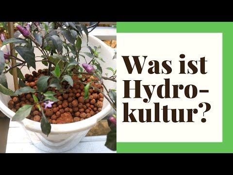 Zimmerpflanzen In Hydrokultur Pflanzen - So Geht's