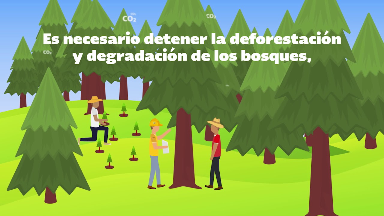Qu es la deforestaci n youtube for Informacion sobre los arquitectos