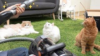 새 청소기가 신기한 고양이들