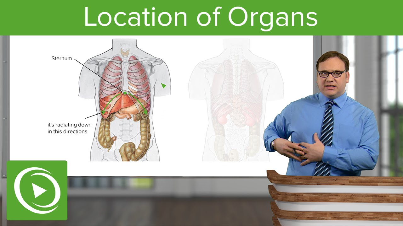 Location of Organs – Anatomy | Lecturio