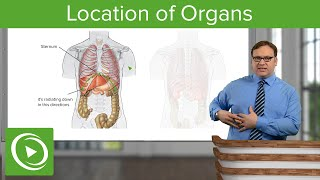 Location of Organs – Anatomy | Medical Education Videos