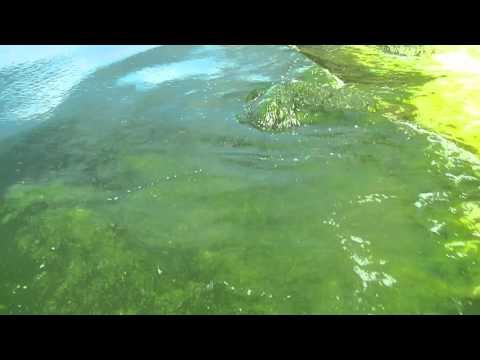 Algae Season Boracay 2016