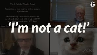 Attorney accidentally leaves cat filter on during Zoom call: 'I'm here live, I'm not a cat!'