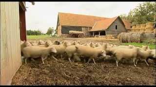 Elevage, territoire et paysages : l'élevage ovin joue un rôle clé dans l'environnement
