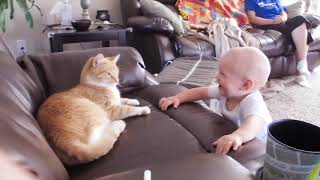Baby And Cat Fun And Cute #5  Funny Baby Videos