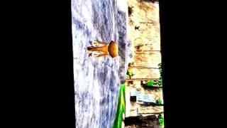 Madagascar 2 sur WII