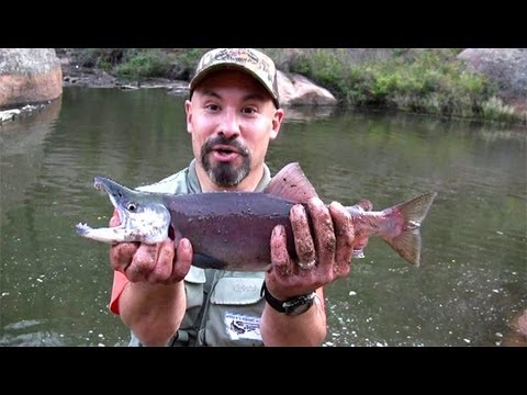 Colorado kokanee salmon adventure youtube for Gross reservoir fishing