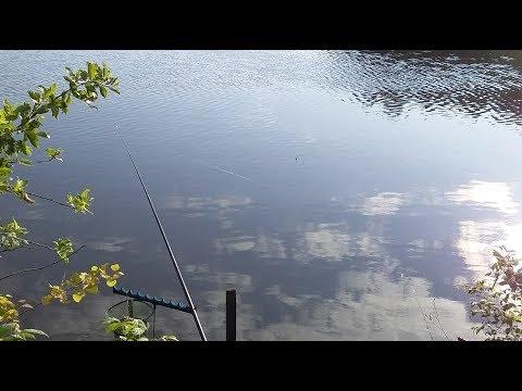 Рыбалка на поплавочную удочку в тихой заводи. Ловля на утреней зорьке на поплавок.