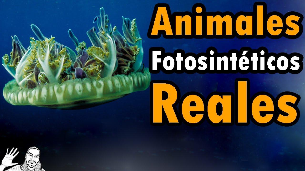 Animales Fotosintéticos Reales