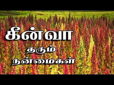 Quinoa   Quinoa In Tamil   Quinoa Benefits In Tamil
