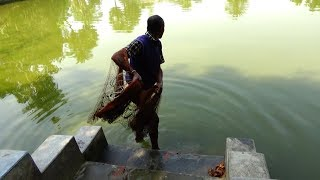 Net Fishing   Catching Fish With Cast Net   Net Fishing in the village (Part-206)