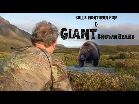 "Download ""Bulls, Northern Pike, and Giant Brown Bears"" MDMM Season 5, Ep. #9, Alaska moose brown bear hunting"