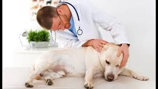 Почему собака часто трясет ушами, что делать, как помочь питомцу.