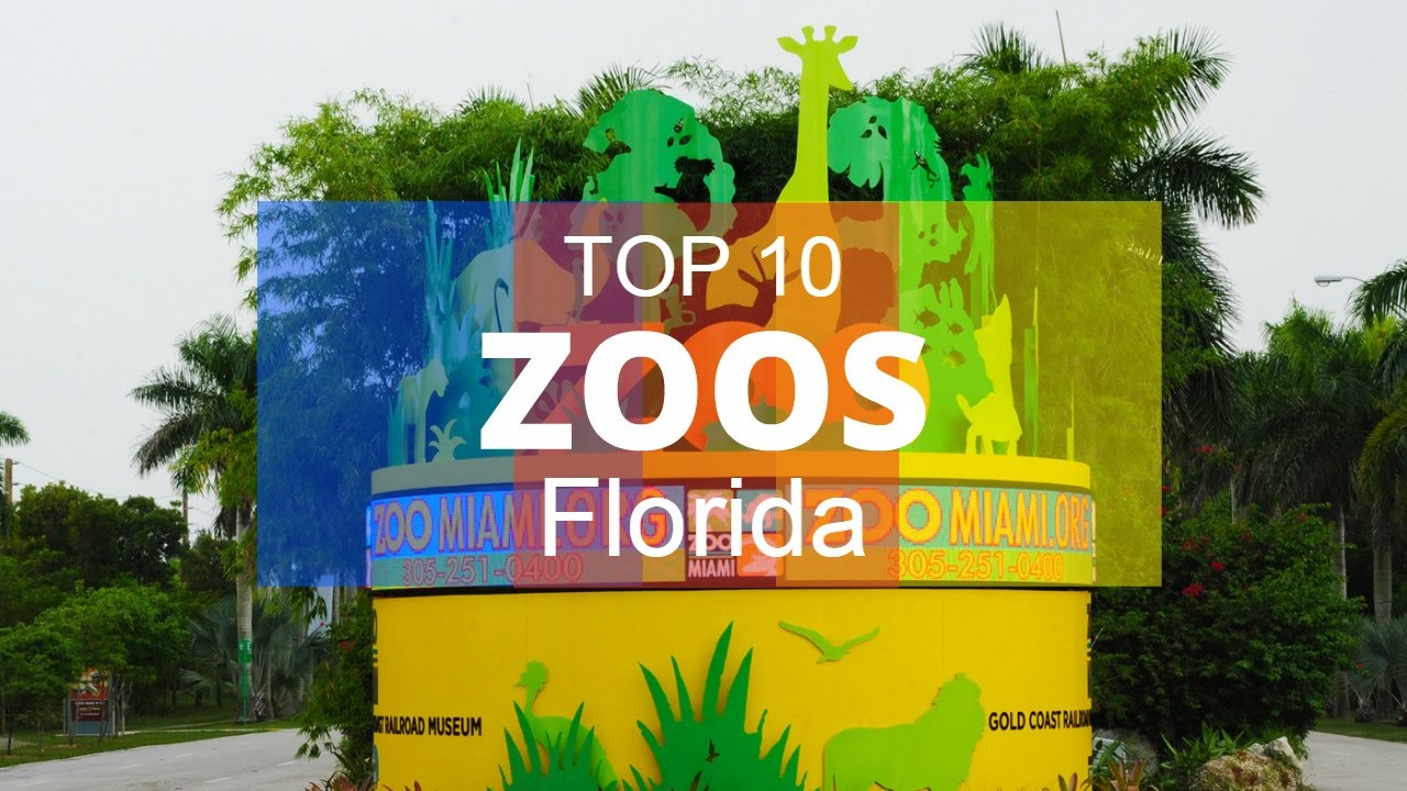Top 10 best zoos in florida youtube for Top arredi floridia