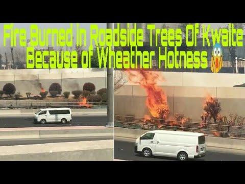 Latest news of Kuwait | Sunlight Burns roadside trees