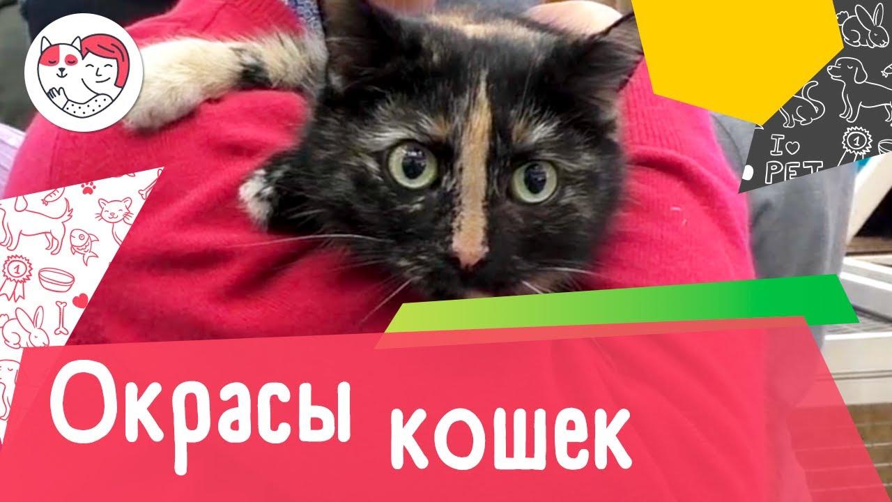 8 самых популярных кошачьих окрасов