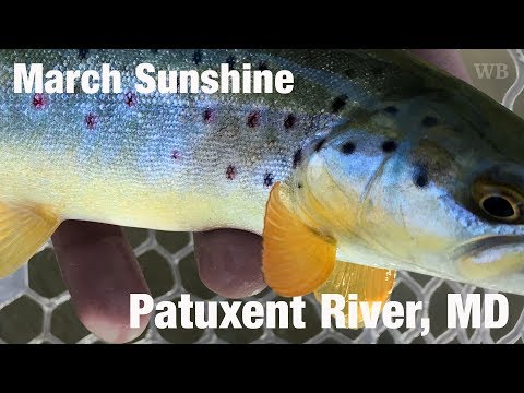 WB - Fly Fishing March Sunshine, Patuxent River, MD - March '18