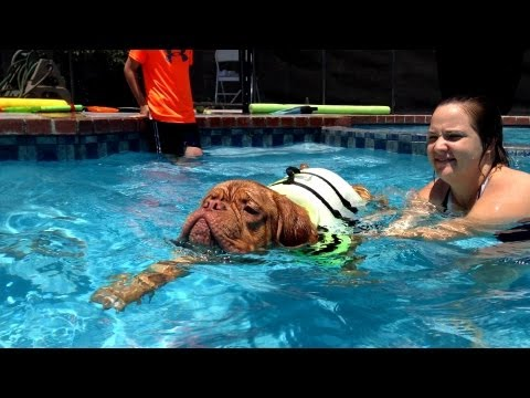 Dog Training: How to Teach a Dog to swim