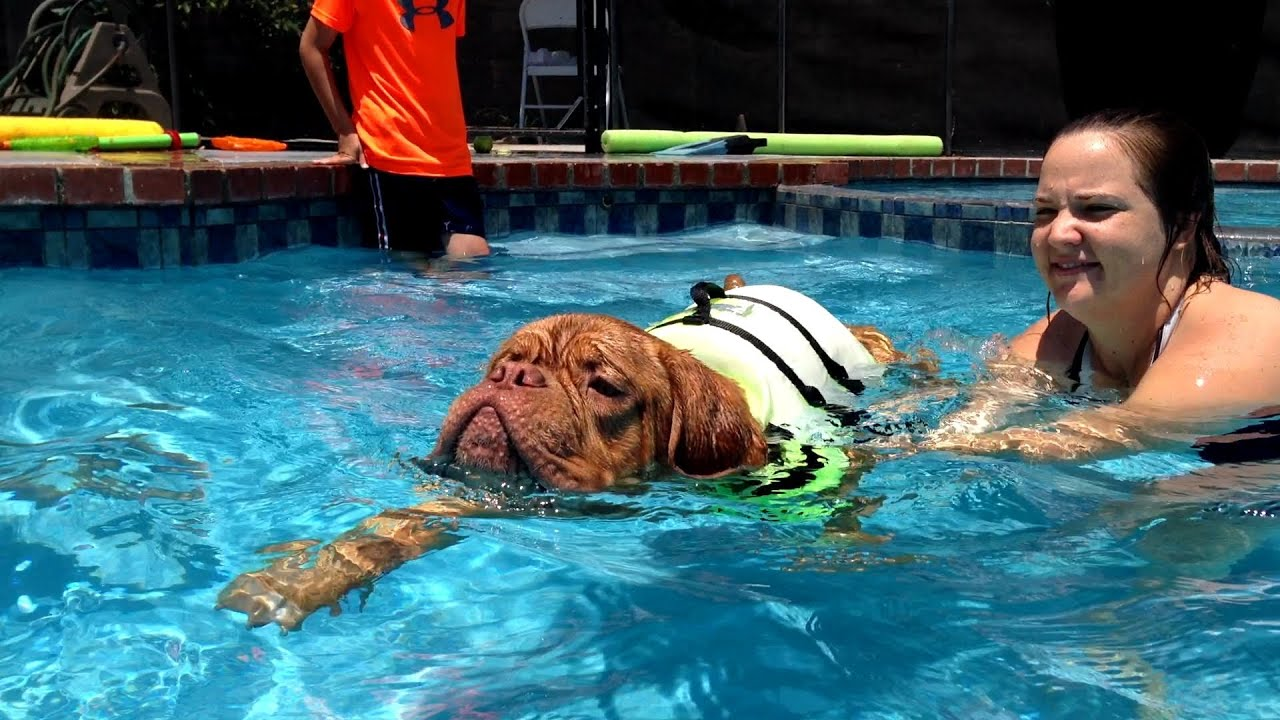 Dog training how to teach a dog to swim youtube How to train your dog to swim in the pool