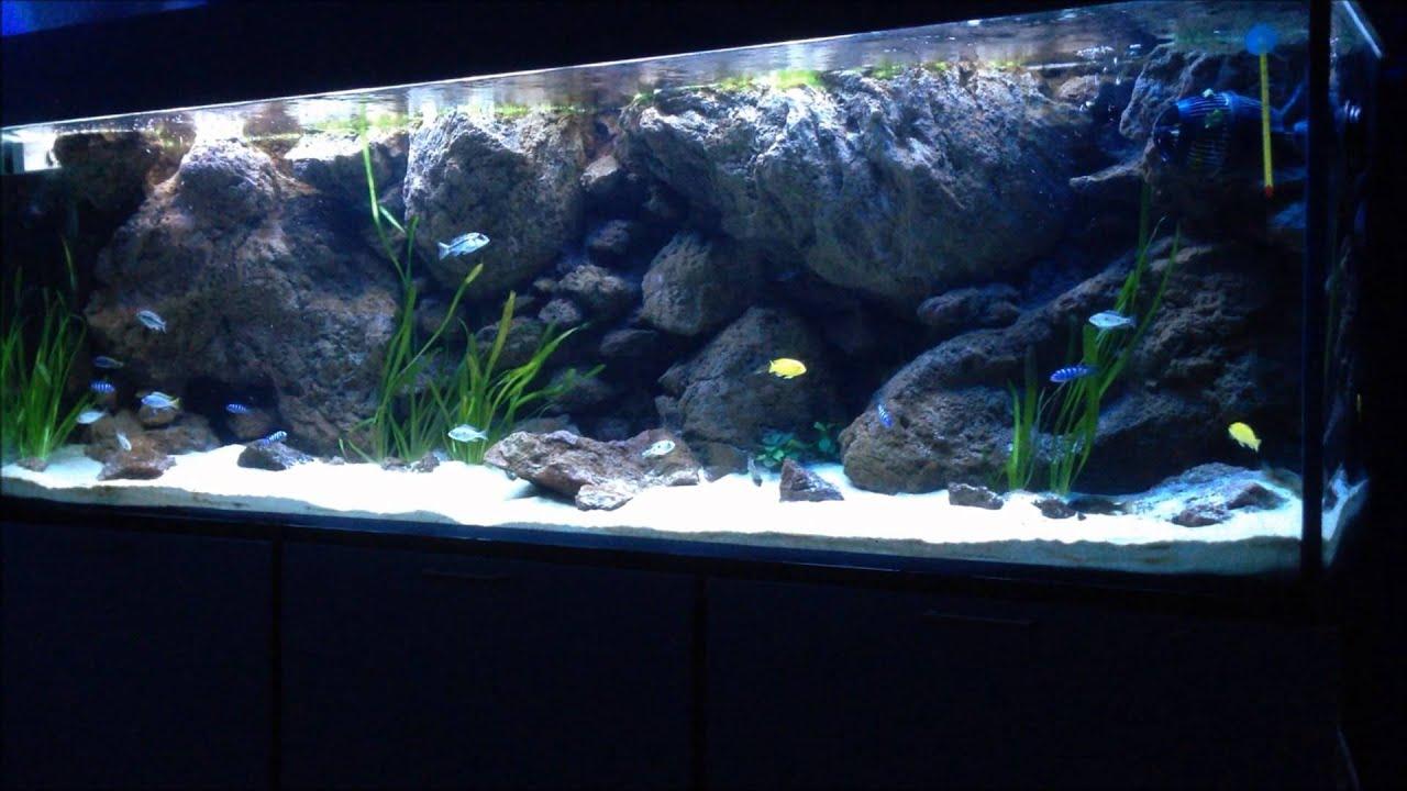 Acquario malawi sfondo 3d volcanic stone blue cichlid for Filtro acquario fai da te