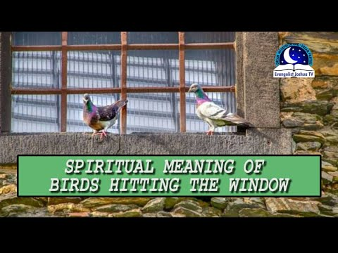 WHAT DOES IT MEAN WHEN A BIRD HITS YOUR WINDOW - Find Out The Biblical Dream Meaning