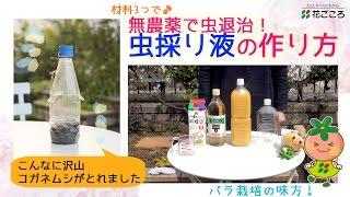 虫採り液の作り方【無農薬で害虫対策!】 thumbnail