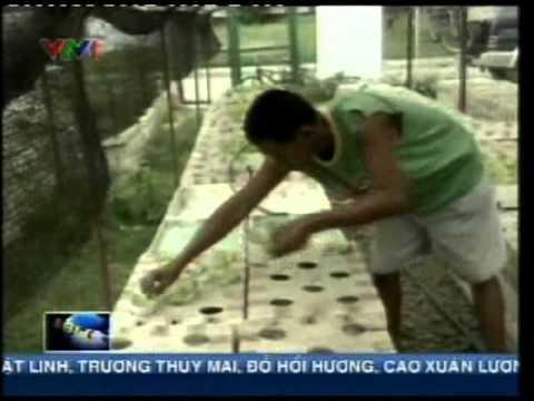 Phương pháp thủy canh của Philippines.flv