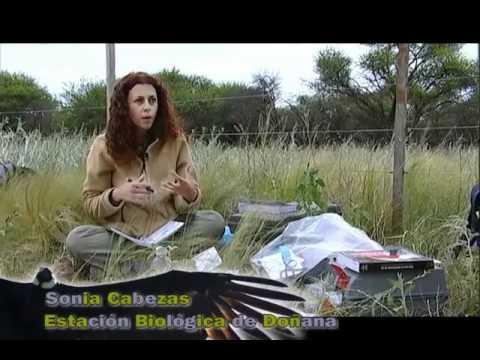 Argentina: Las alas de la Pampa
