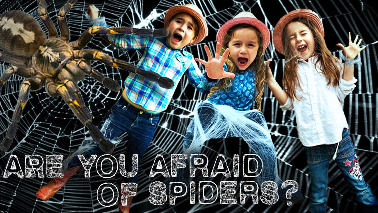 spiders for kids orb weaver spider are you afraid of spiders