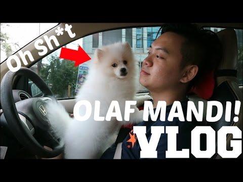 AYO KITA MANDIKAN OLAF!!!