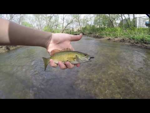 Hunting Trout And Smallmouth At French Creek!! (Phoenixville, PA)