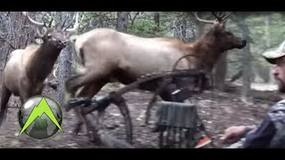 A Magical Morning in the Elk Woods – Bowhunting for Elk Hunting Video