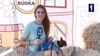 Афіша+ Виставка собак
