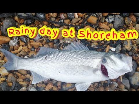 A Bass In The Rain At Shoreham Beach.