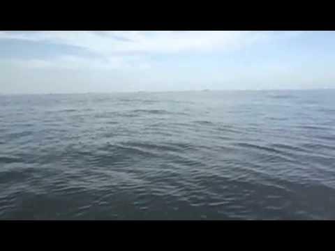 Golfinhos em Santos - 2