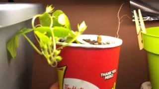 Update On Indoor Seedlings With Grow Lights