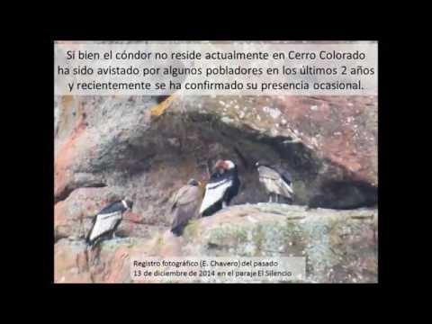 Cóndor como patrimonio natural y cultural