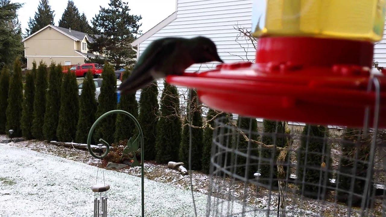one pin gallon house feeder hummingbird and