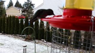 How To Make A Heated Hummingbird Feeder.