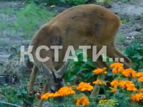 Борьбу с браконьерством и увеличение численности диких животных обсуждали на Нижегородской ярмарке