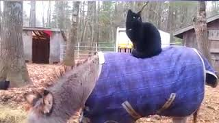 Пятница 13 коты / Friday the 13th Cats