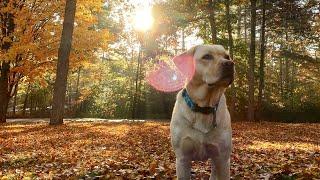 Stella Got a Leaf Blower!