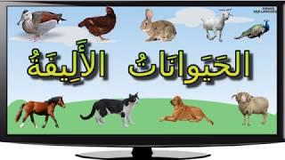 الحيوانات الاليفة او حيوانات الضيعة و اصواتها
