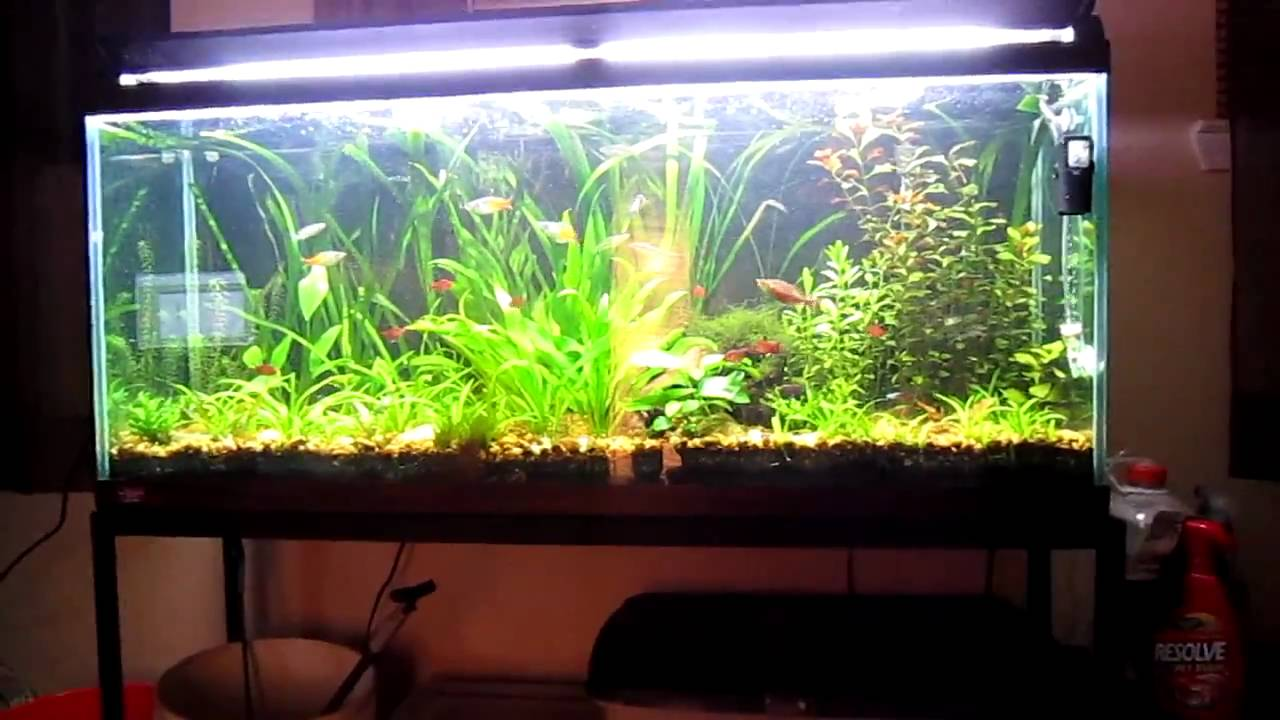 Natural filtration in my aquarium hd youtube for Natural fish tank