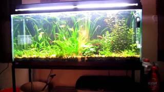 Natural Filtration In My Aquarium (HD)