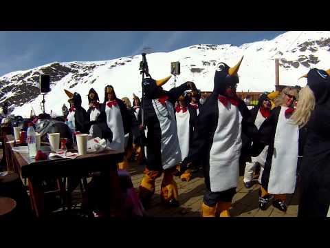 Bruno Maz Penguins