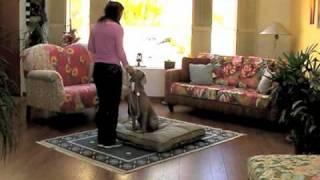 30 Day K9 Fitness Guide - Spot - Dog Treadmill Training